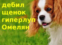 Chervonenko - DOG-1-220-158.png